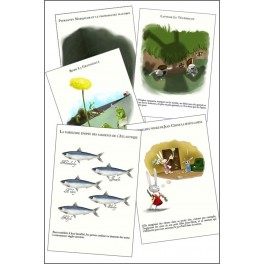 Cartes postales (lot de 5) - Les belles histoires de madame Gimbard